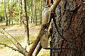 Notecka Forest, Bablin, Nowoloskoniec (2).JPG
