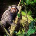 O Mico e a Natureza.JPG