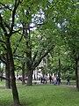 Oak planted by the emperor by emperor Alexander II.JPG
