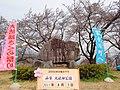Oboshi-park cherry blossoms monument.JPG