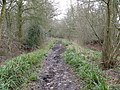 Old House Lane bridleway - geograph.org.uk - 1196584.jpg