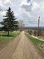 Open Road - Lonely Pine Tree - South of Meaford, Ontario.jpg