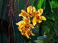 Orchid at USBG (18160).jpg
