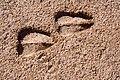 Oryx gazella tracks - Flickr - aspidoscelis.jpg