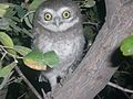 Owl sitting on tree at night.jpg