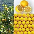Owoce Cytryna.jpg