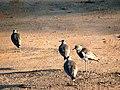 Pássaros em Arroio dos Ratos.JPG
