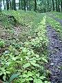 Přírodní park Baba891.jpg