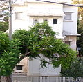 P1190883 - אחד הבתים - מראה כללי מרחוק.JPG