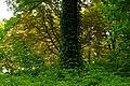 P1420395 Парк садиби Вітославських-Львових.jpg