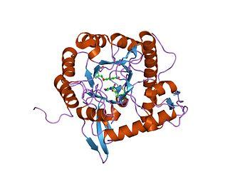 IMP dehydrogenase - Image: PDB 1meh EBI