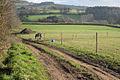 Paddock, Hestow Barton - geograph.org.uk - 1624971.jpg
