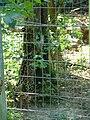 Panthera onca 1 - Parc des félins.JPG