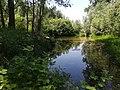 Parco Regionale del Brenta.jpg