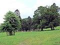 Parkland landscape - geograph.org.uk - 484837.jpg