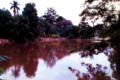 Parque Chico Mendes Osasco.png