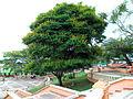 Parque Municipal Icononzo Tolima 4.JPG