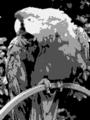 Parrot CGA noburst-mono palette.png