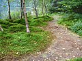 Path on the lake shore - Szent Anna to - Lacul Sf. Ana - St.Anne's Lake - panoramio.jpg