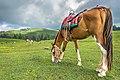 Paye Meadow - Shogran.jpg