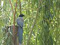 Peace Harmony Nature 27.JPG
