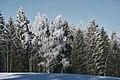 PermaLiv Byvegen-Overnvegen-vinter-trær 29-01-21 13.jpg
