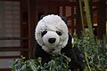 Petit panda au jardin (6824126464).jpg