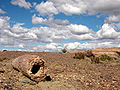 Petrified-wood-7.jpg