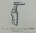 Picture Natural History - No 247 - The Chrysalis, Admiral Butterfly.png