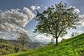 Pietra di Bismantova - Canossa (RE) Italia - 25 Settembre 2012 - panoramio.jpg