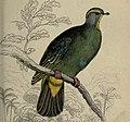 Pigeons (Plate 4) (6976180713) (cropped).jpg