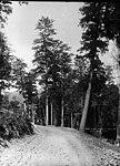 Pine Forest, Richmond Range (2448019588).jpg