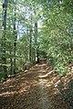 Pine walk, Shaftesbury, Dorset - geograph.org.uk - 1007882.jpg