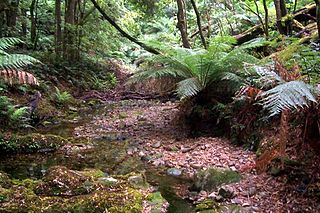 Deua National Park Protected area in New South Wales, Australia