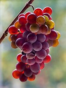 Pinot Grigio-20201027-RM-114053.jpg