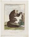 Pithecia leucocephala - 1700-1880 - Print - Iconographia Zoologica - Special Collections University of Amsterdam - UBA01 IZ20200222.tif