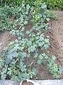 Plants in Sector 28 Faridabad 1.jpg