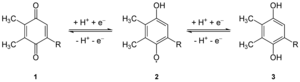 Plastoquinone - The reduction (from left to right) of plastoquinone (PQ) to plastosemiquinone (PQH.) to plastoquinol (PQH2).