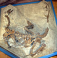 Plateosaurus MSF23.jpg