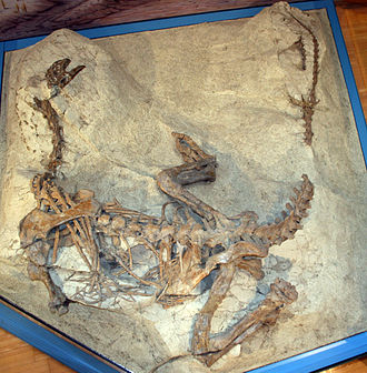 Frick, Aargau - Plateosaurus fossil at the museum