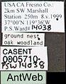 Pogonomyrmex californicus casent0005710 label 1.jpg