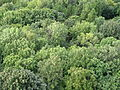Pohled z Hazmburku, koruny stromů pod kopcem (002).JPG