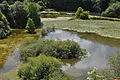 Pond at Conservatoire botanique national de Brest.jpg