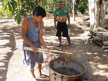 English: ayahuasca preparation