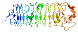 Protein DCN PDB 1xcd.png