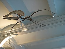 Skeleton posed in flight near the ceiling of a large room
