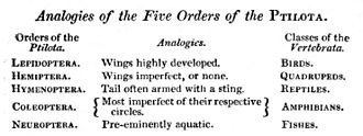 Quinarian system - William John Swainson's arrangement of the insects, with analogies to the vertebrates