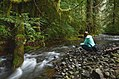 Public land access - Olympic National Forest - October 2017 02.jpg