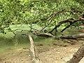 Puerto Princesa, Palawan, Philippines - panoramio (31).jpg