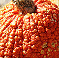 Pumpkin-6508 texture detail - very warted.jpg